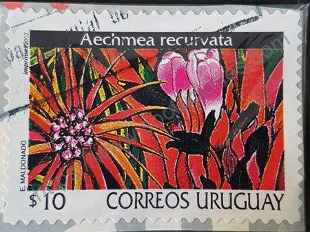 Aechmea recurvata estampilla de Uruguay año 2002