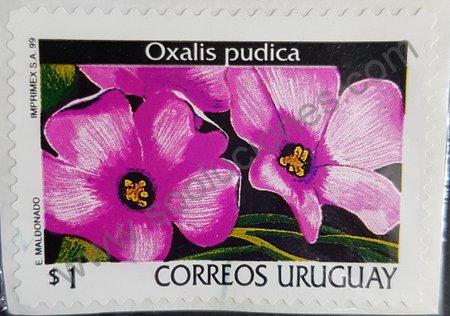 Sello: Oxalis pudica Uruguay 1999