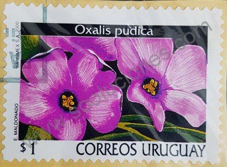 Sello de Uruguay año 2000 Oxalis pudica