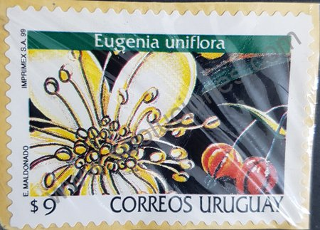 Sello Uruguay 1999 Eugenia uniflora