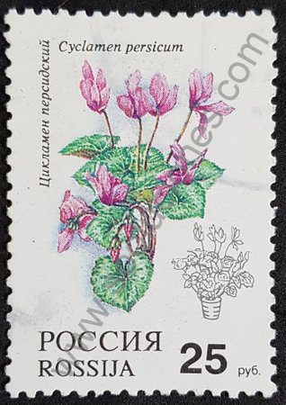 Sello Rusia 1993 Cyclamen persicum