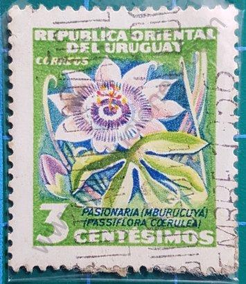 Sello Uruguay 1954 Flor de la pasión