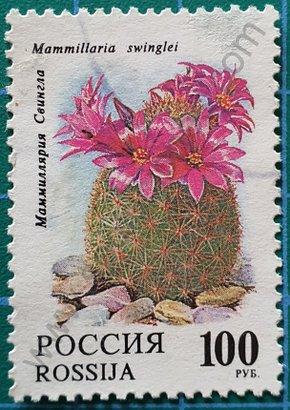 Sello Rusia 1994 Cactus Mammillaria sheldonii