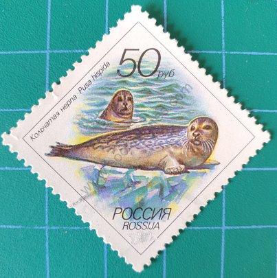Sello Rusia 1993 foca ocelada
