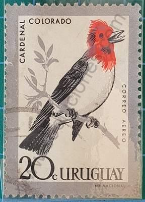 Cardenal Colorado - Sello Uruguay 1962